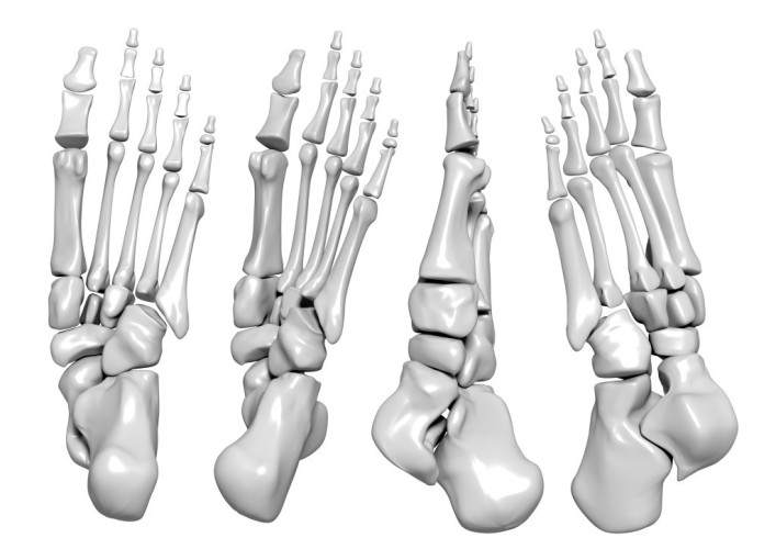 Did you know? there are 26 bones, 33 joints and around 100 muscles, tendons and ligaments  in just one foot